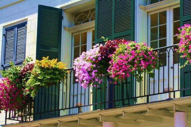 balkon gestaltung pflanzen hängepflanzen geländer | Süd Frankreich ...