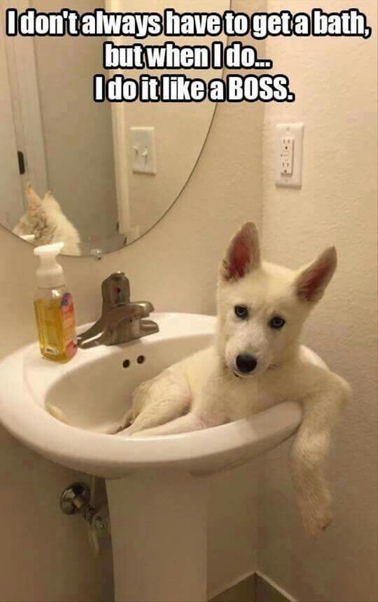 Pin On Bathtime