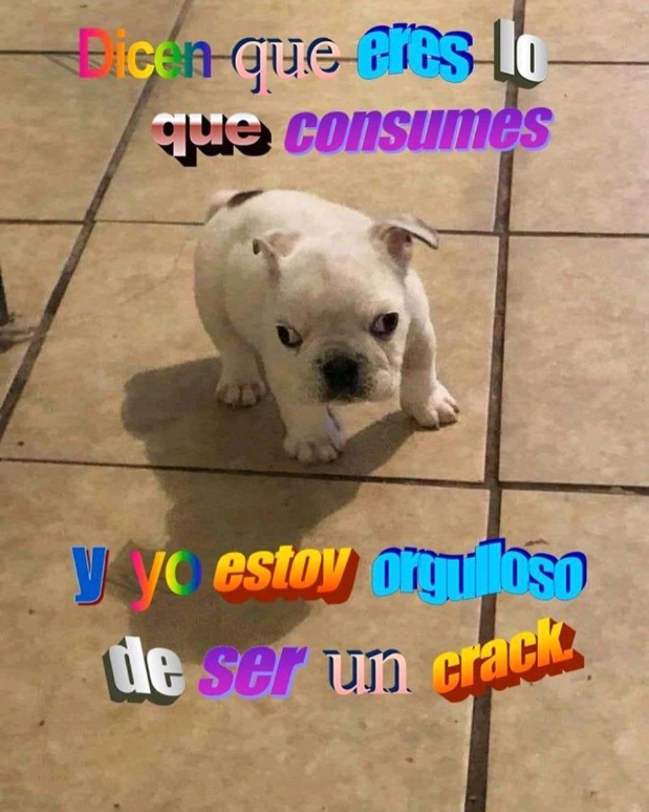 Jajajajajajajaja Csm America Memes Meme Chile Chilegram Mexico Usa Instagram Memeschile Jokes Humorchilen Funny Animal Jokes Memes Animal Jokes