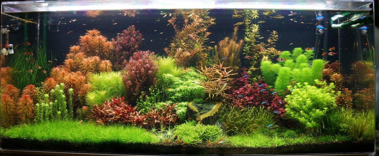 Planted Tank Dutch Jungle By Mark Crow Aquascape Awards