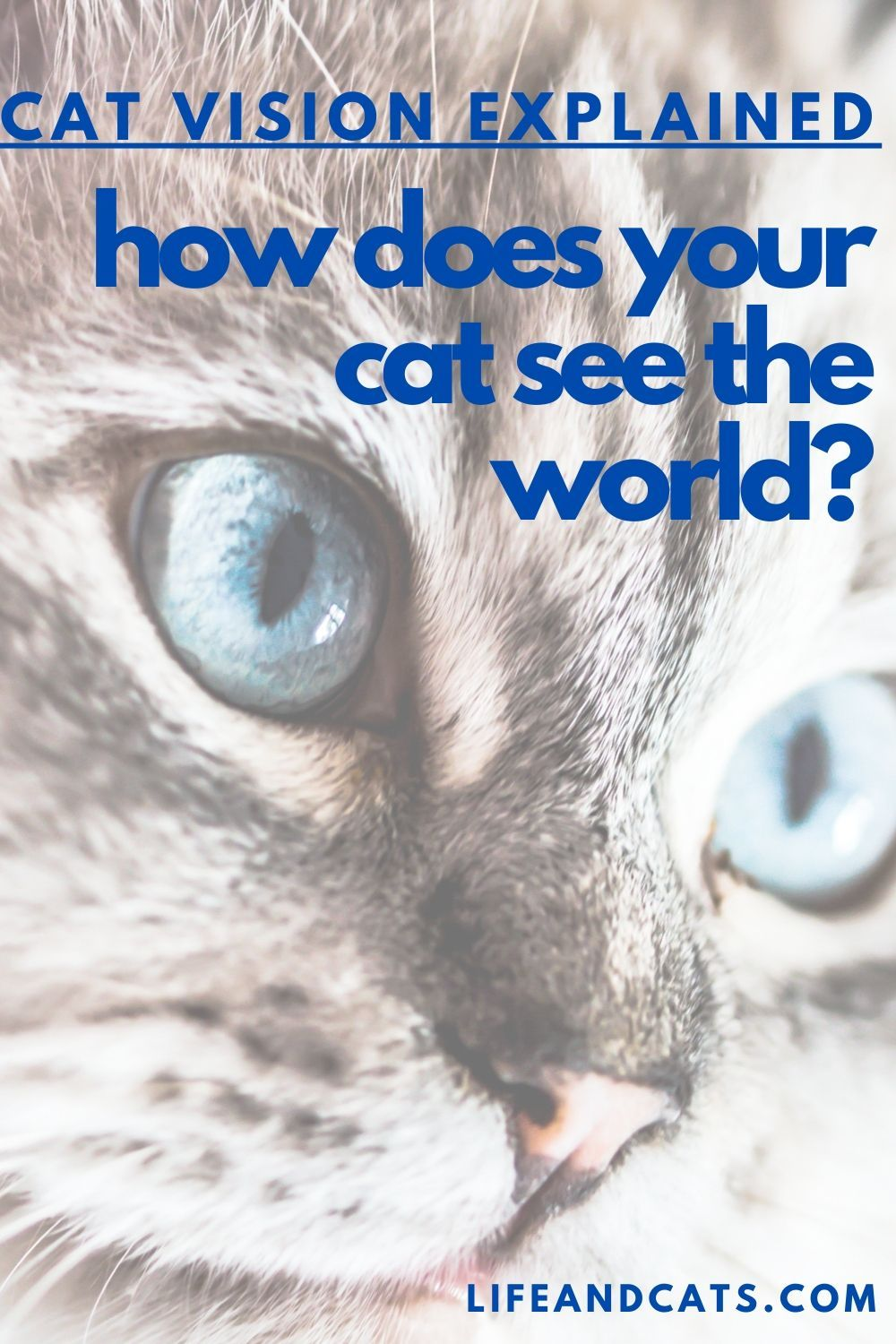 Through a Cat's Eye How Cats See the World Life & Cats
