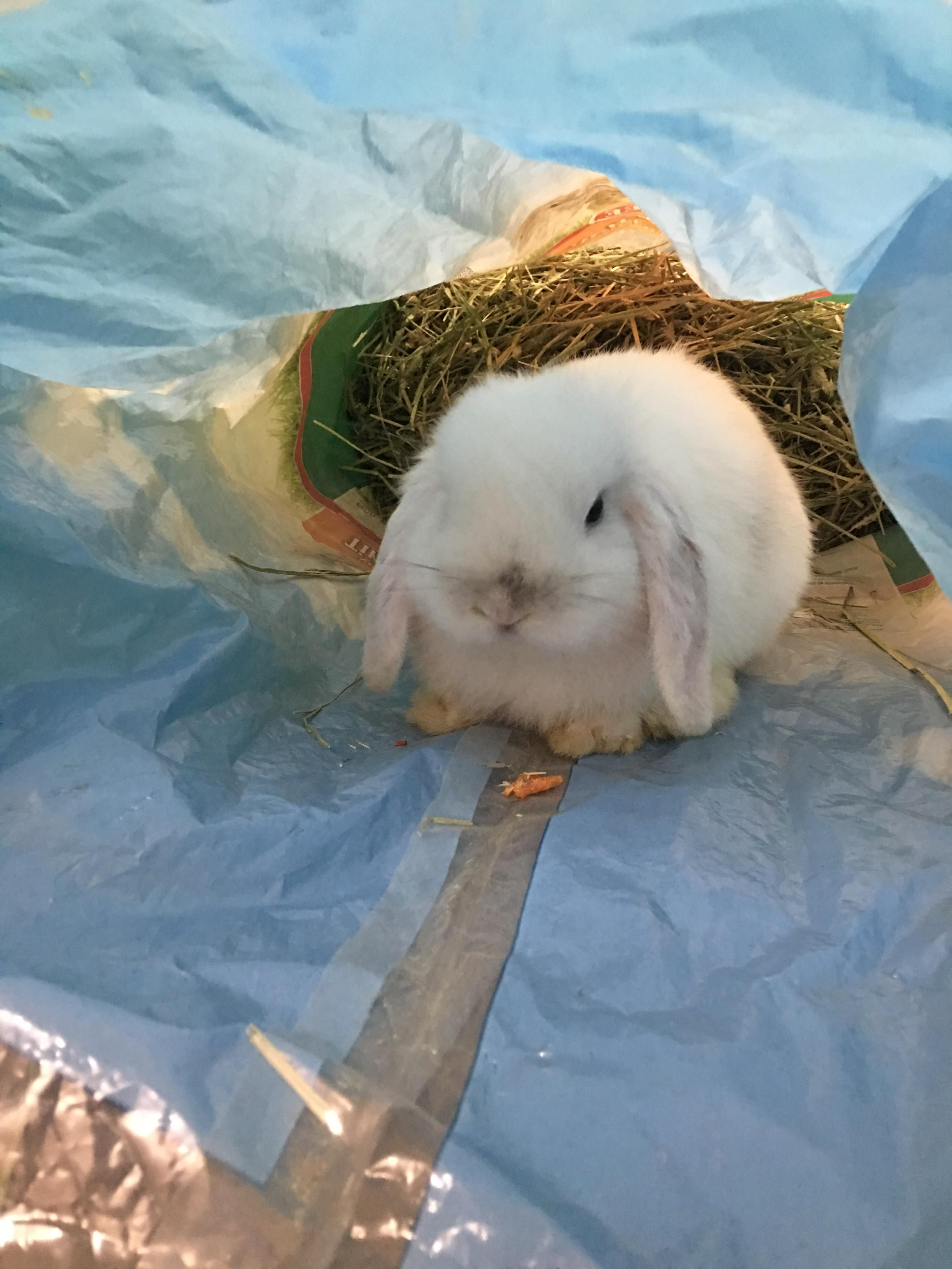 Rabbit Training Cute Bunny Pictures Animal Room Wild Baby