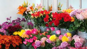 Flower Shops Delivery,  http://www.destructoid.com/?name=herehadsongeorge&a=375231&start=0&chaos=ok&who=me  Flower Shops Near Me,Flower Shop,Flower Shop Near Me,Flower Shops,Flowers Near Me