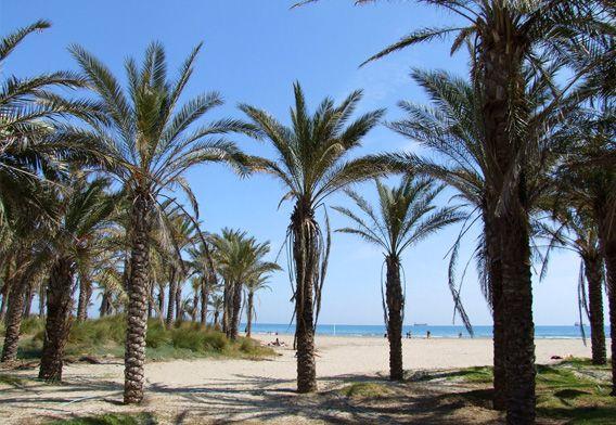 Playa Del Pinar Playa Del Gurugú Palmeras Arena Mar Y Sol Grao De Castellón Graocastellon Vacaciones España Destinos Vacaciones Vacaciones En Pareja