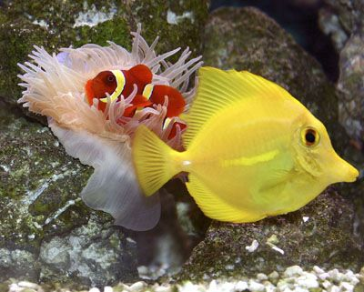 Awesome beginner fish for a saltwater aquarium saltwater for Saltwater fish tanks for beginners