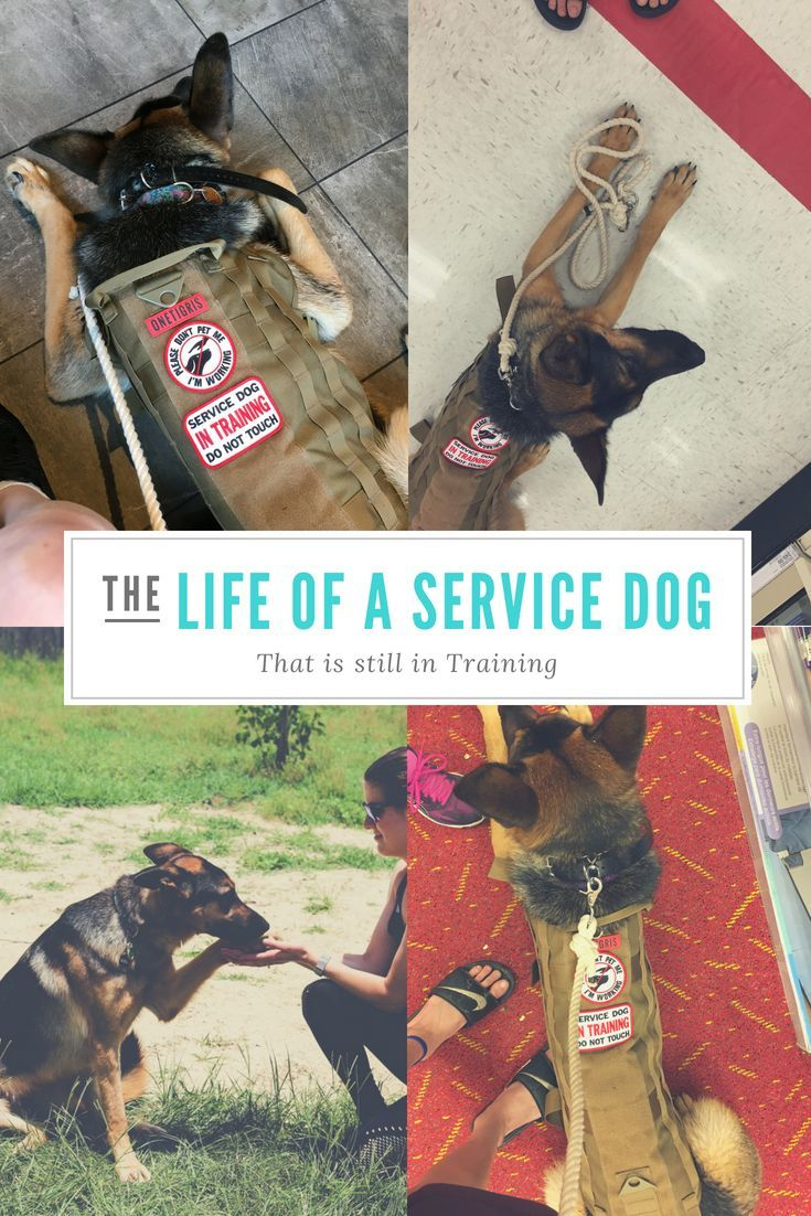 The costs associated with training a service dog aren't