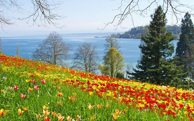 Insel Mainau The Flower Island Of Lake Constance Attractions In Germany Tourist Tourist Attraction