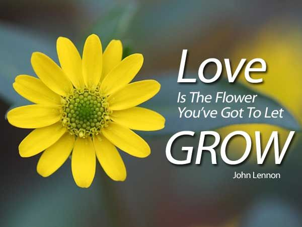 Love is the flower flower and gardens love is the flower mightylinksfo Image collections