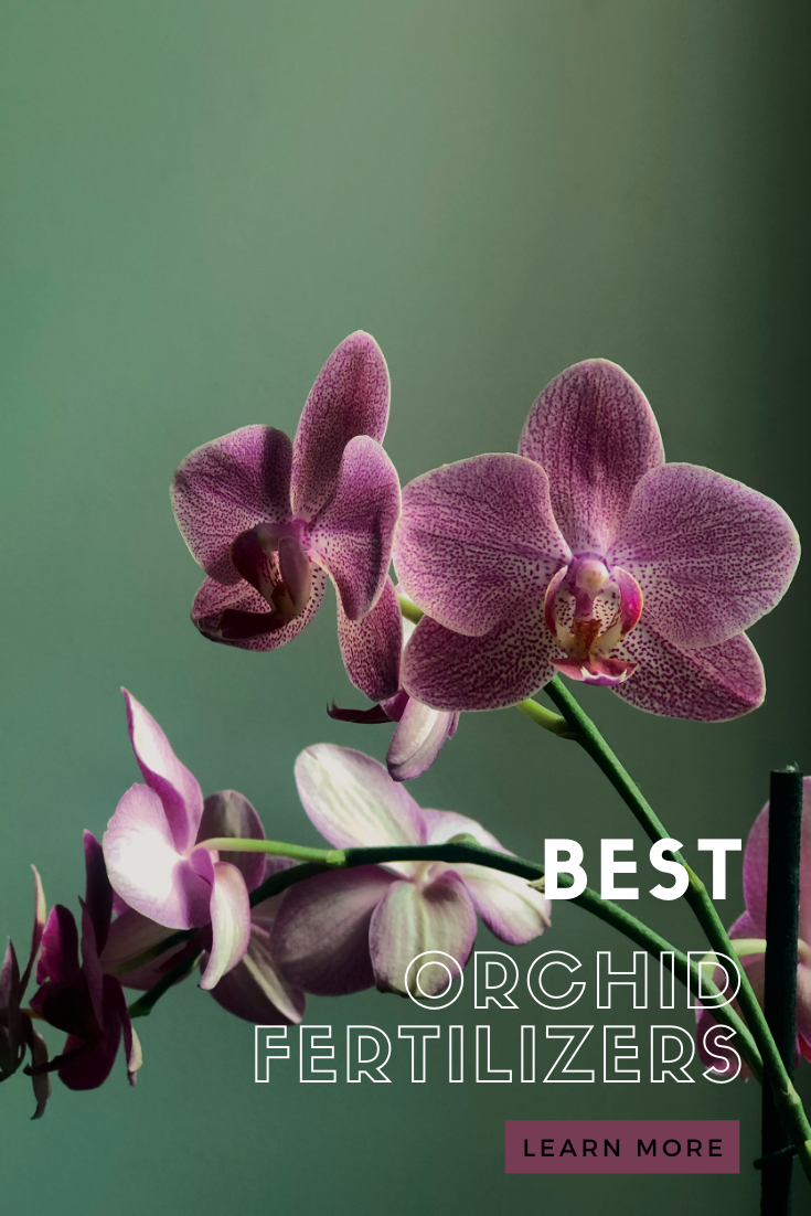 Uses Eggshell Powder Every 2 Weeks Fertilizing Orchids Bloom Booster Recycling Flowers In 2020 Orchids Orchid Fertilizer Fertilizer