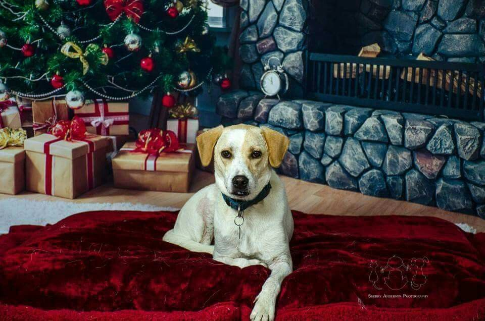 Christmas session with Wyatt. Book your session today at