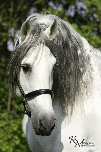Katja Mayer Pferdefotografie Impressionen