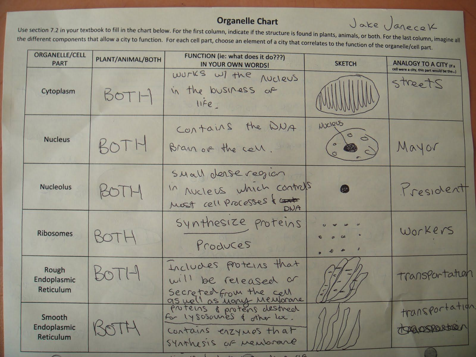 worksheet Cell Organelles Table Worksheet cells worksheets edible matching format this and their organelles worksheet