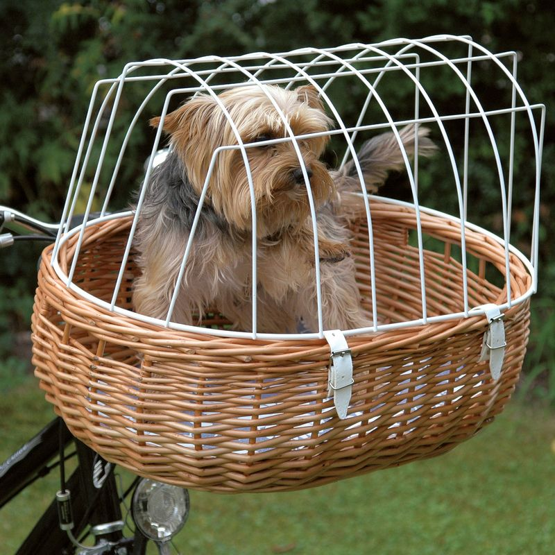 Pin Von Crystal Auf Hunde Hund Fahrrad Hunde Fahrrad