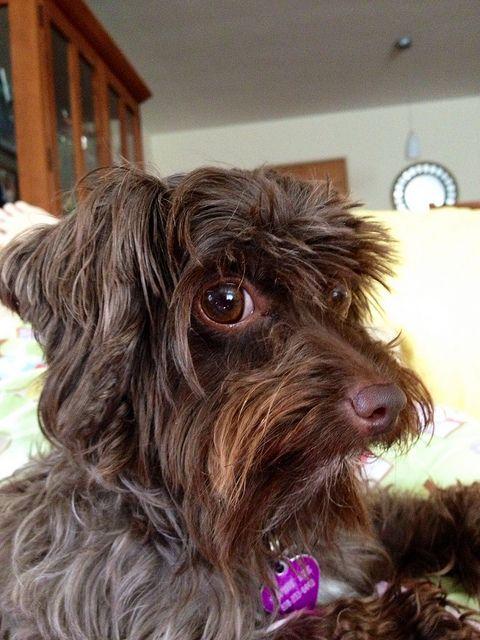 Pin De Ma Dolores Perez Arenas En Lindas Mascotas Perros Bonitos Mascotas Perros