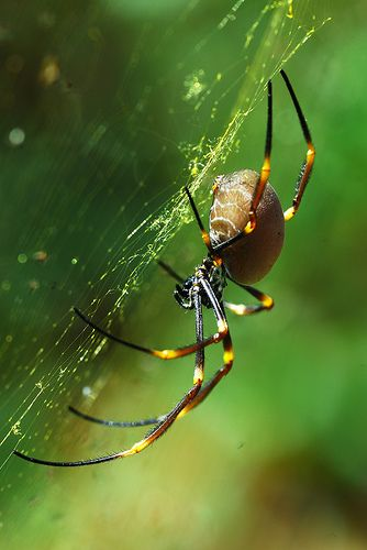 Wonderful World of Animals: Some Interesting Facts About Insects ~ Amazing Animals