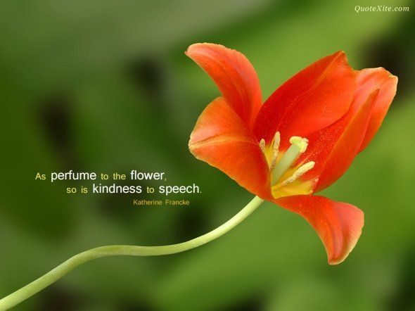 As perfume to a flower, so is kindness to speech