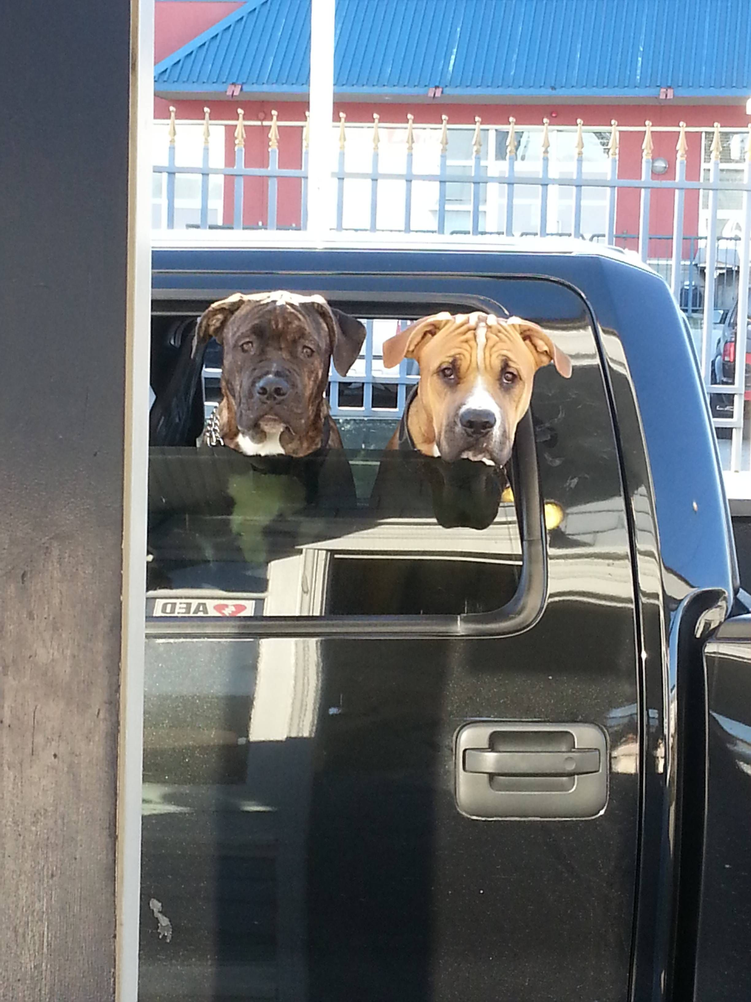 Met these two lummoxes today...I dropped their treats. http://ift.tt/2qNqidX