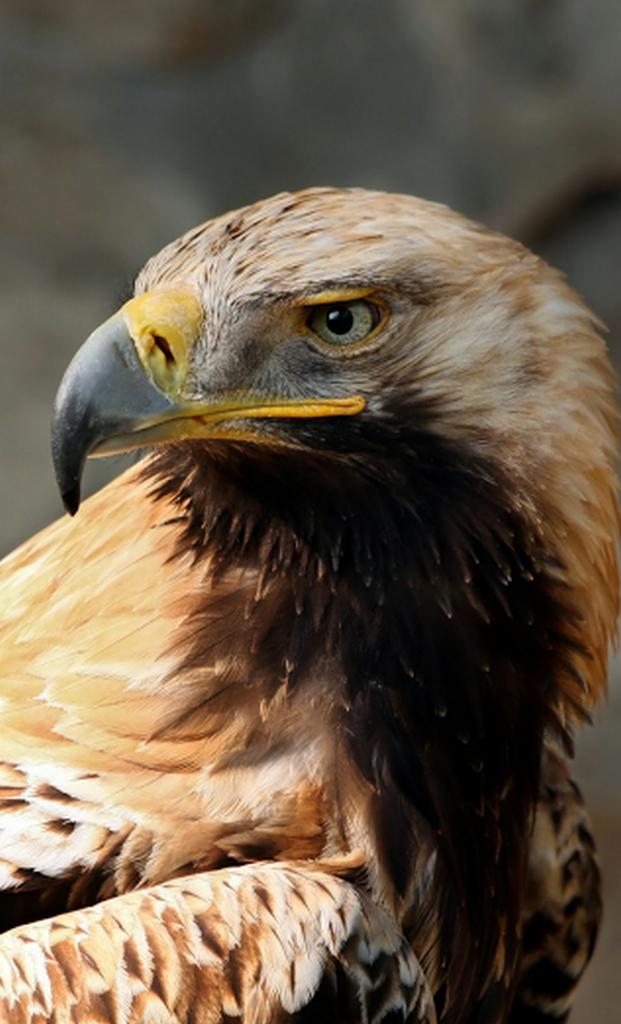 железнодорожный картинка орел который есть лишай