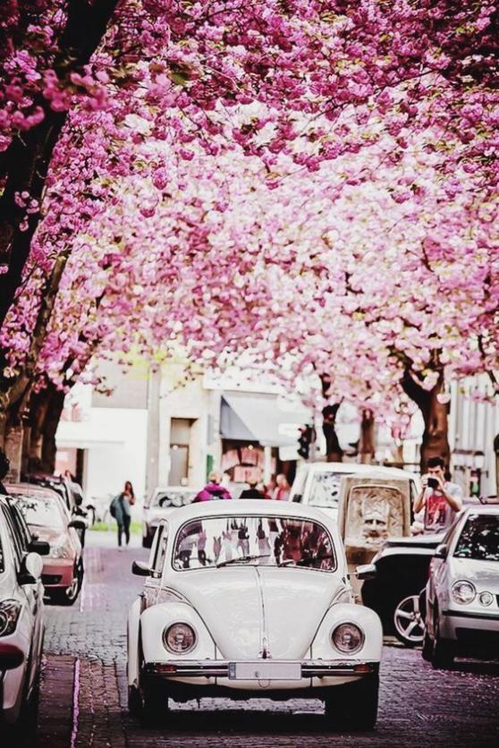 Bonn in spring