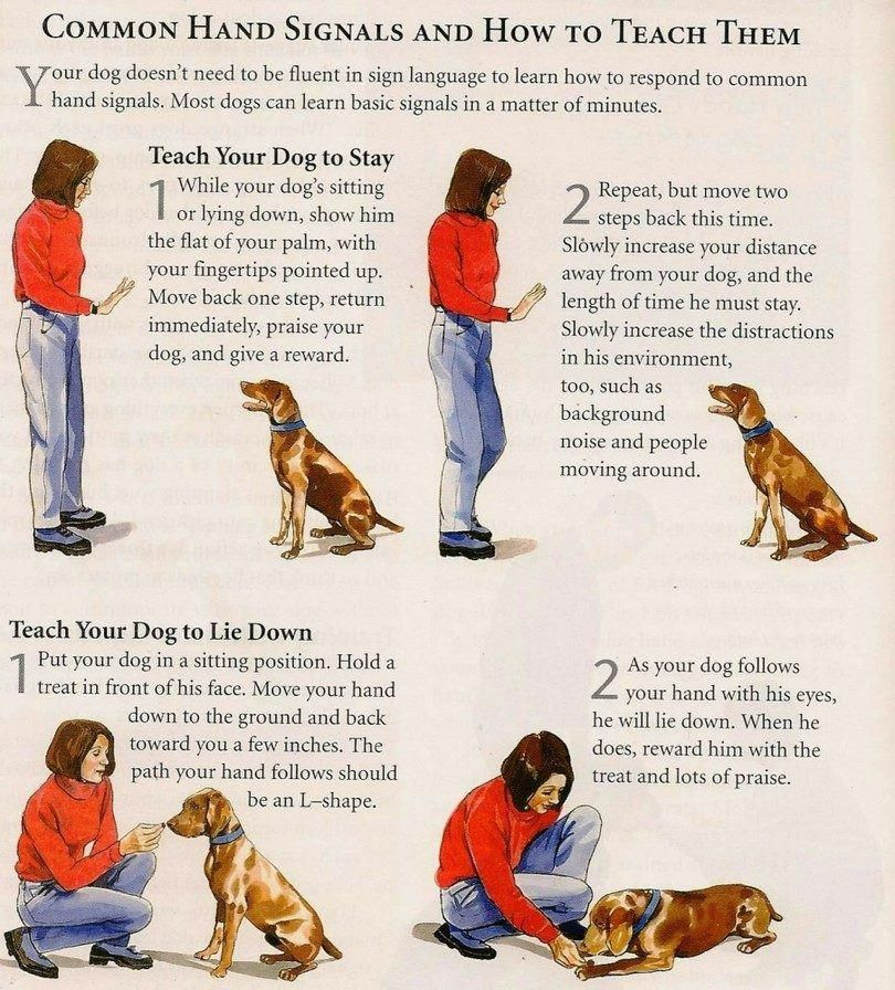 A Hunting Dog Brings A Bird Back To The Hand Learn To Collar Your