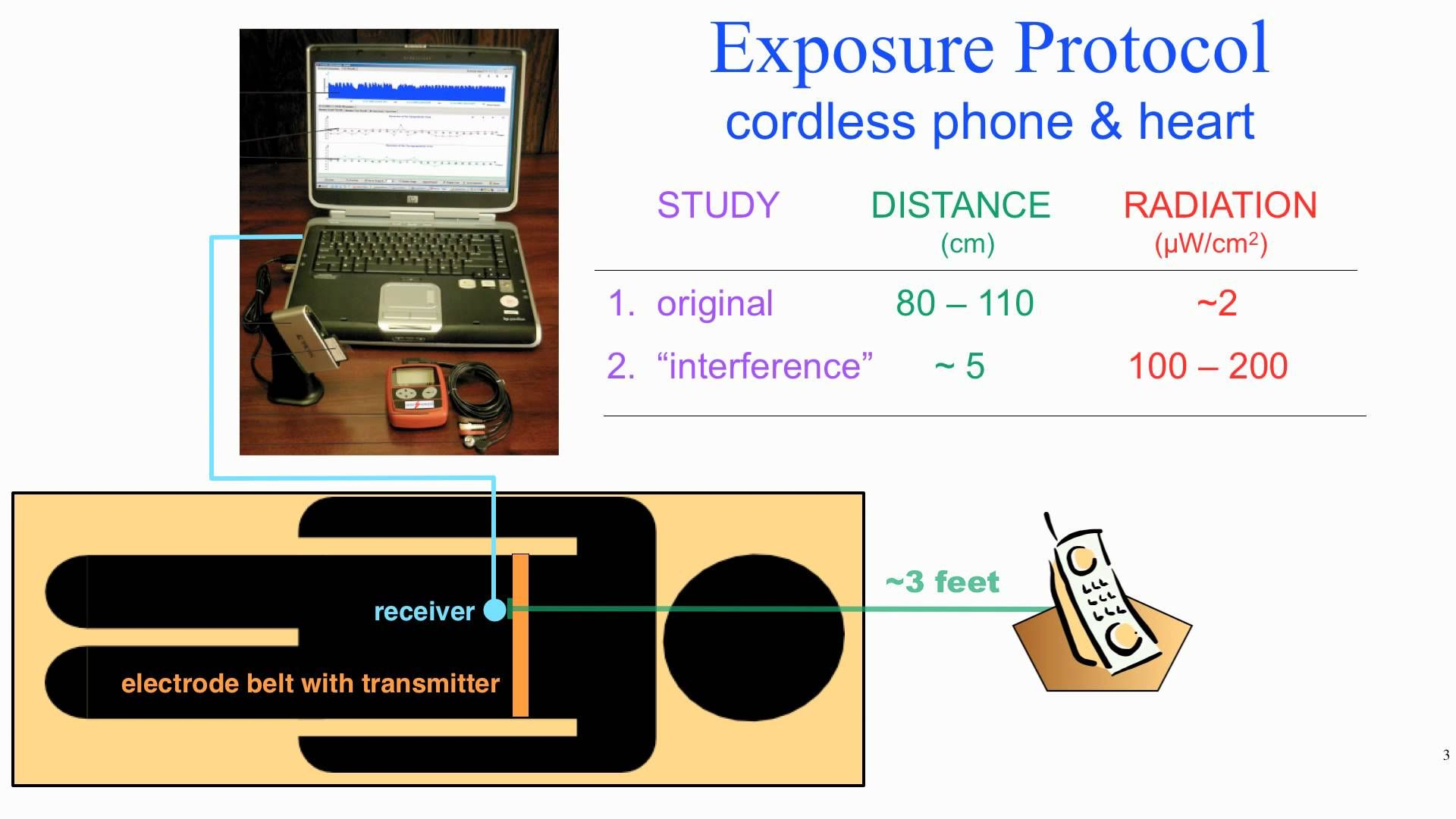 """Microwave radiation [from cordless phones] affects the"