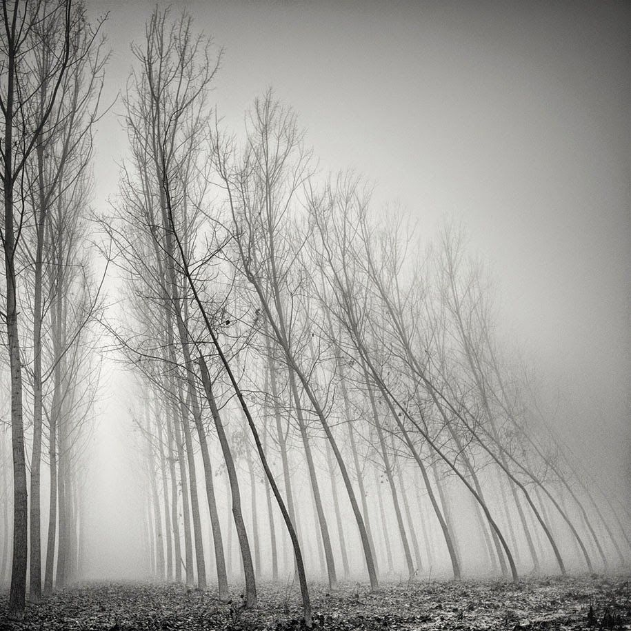 "design-dautore.com: Tree Photography by Pierre  Pellegrini Board ""I See Trees"" - lars björsson"