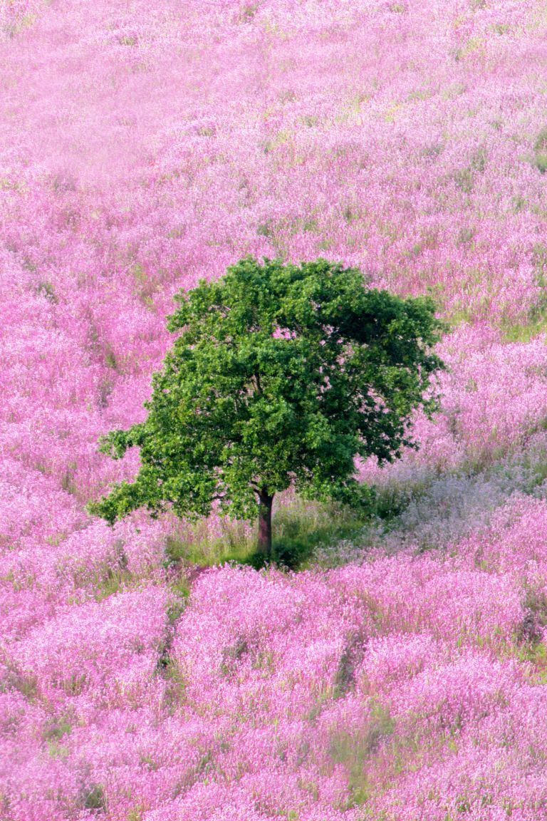 Proof That Pink And Green Is The Best Color Combination Ever Pink Nature Pink And Green Green Aesthetic