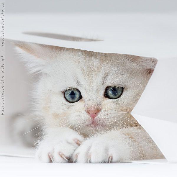 1001 Lustige Katzenbilder Und Katzenspruche Cat Care Cats Pets Cats