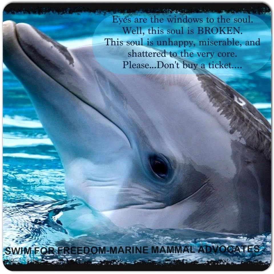 Blue Cove Day nr 7! 7 Sept 2015. Think Blue is also on FB: www ...