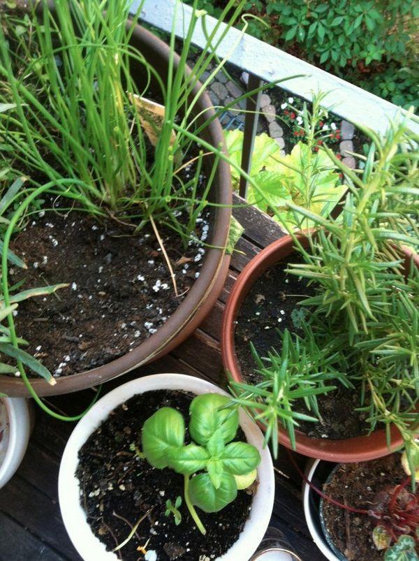 beautiful terrace garden plants ideas