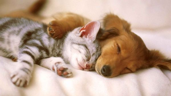 pictures of cats and dogs together , Google Search