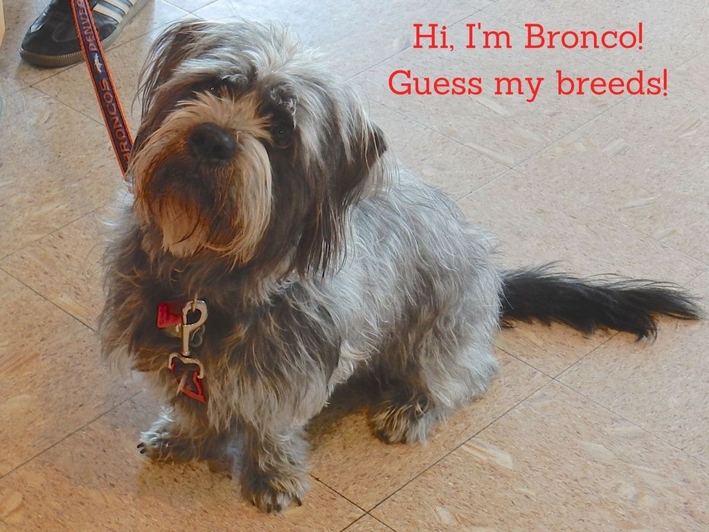 Pin by Arvada West Veterinary Hospita on Contests Animal