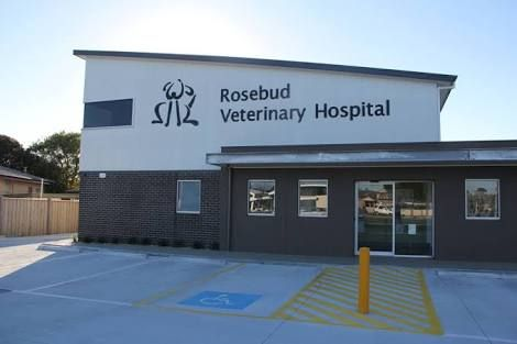 Rosebud Pet Vet Google Search Pet Vet Exterior Rose Buds