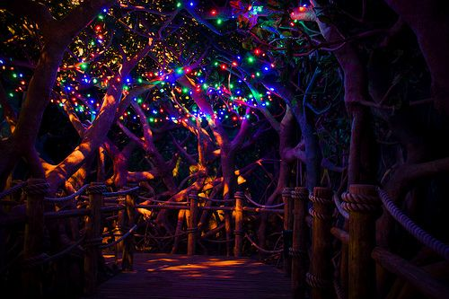 jungle of lights - Google Search  sc 1 st  Pinterest & jungle of lights - Google Search | Electric Forest/Jungle ... azcodes.com