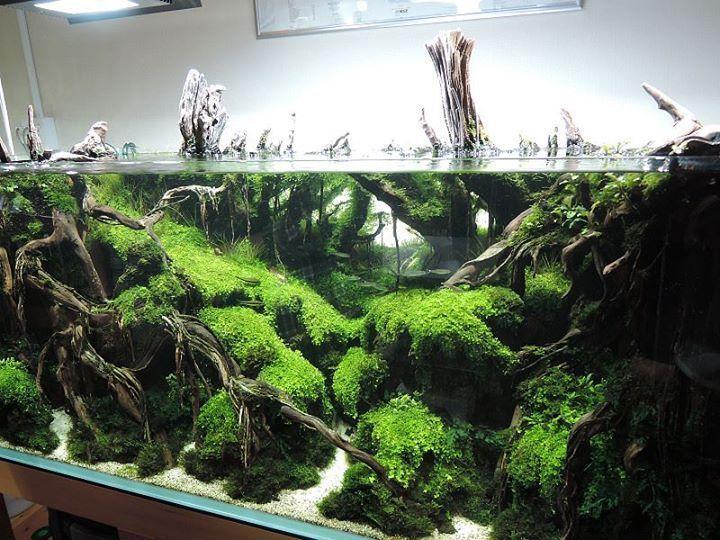 50 Aquascape Aquarium Design Ideas