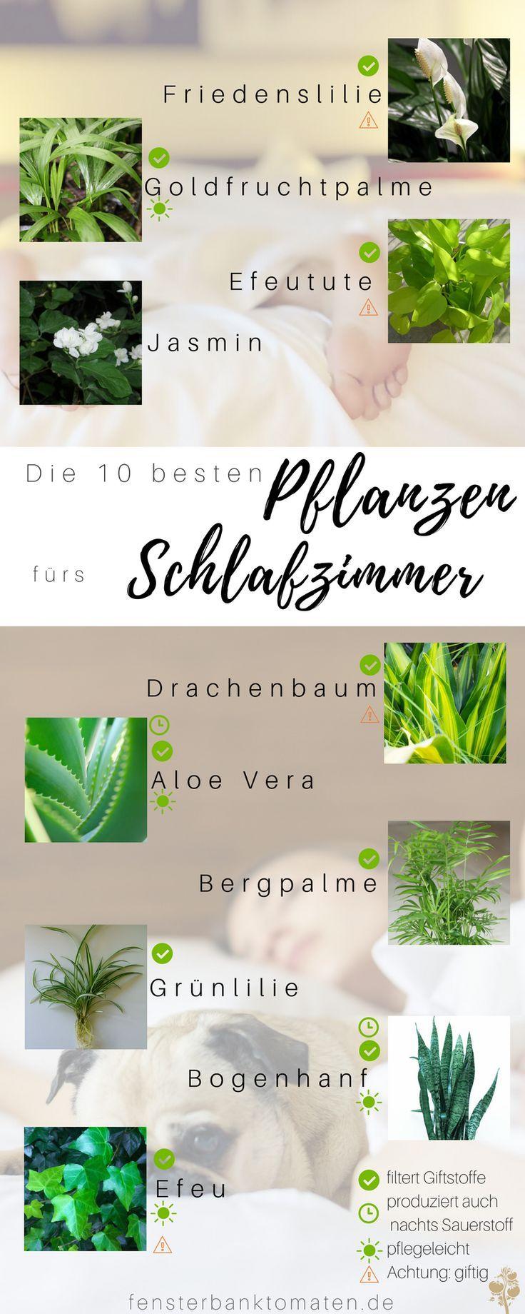 Die 10 besten Pflanzen fürs Schlafzimmer - so optimierst du deinen Schaf
