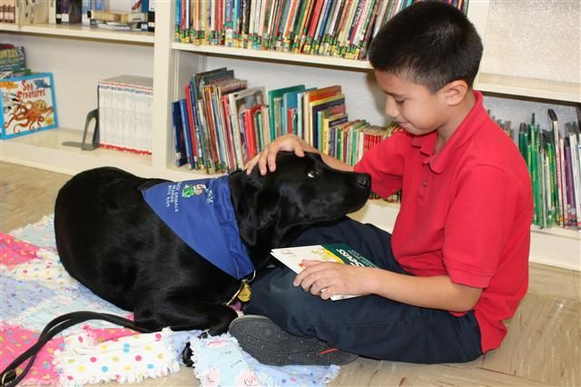 Therapy Dog Therapy Dogs Animals Service Dogs