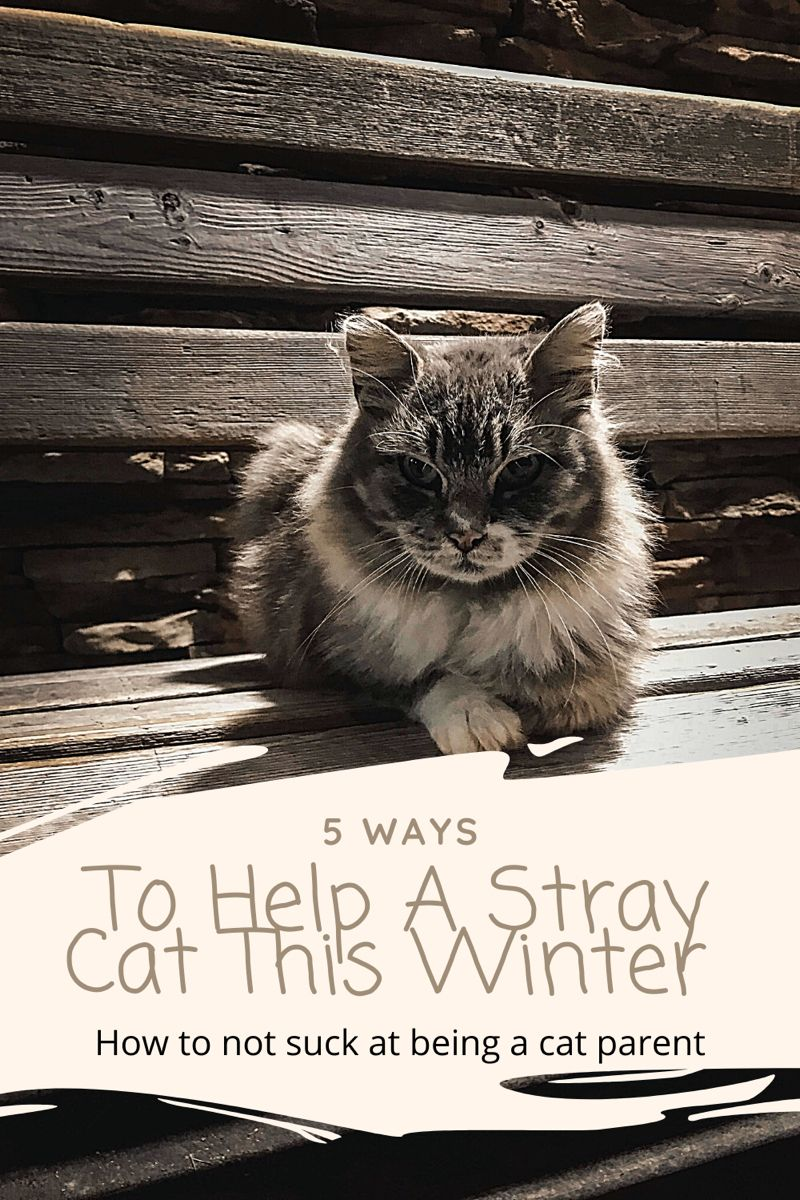 5 Ways To Help A Stray Cat This Winter Cats Stray Cat Cat Parenting