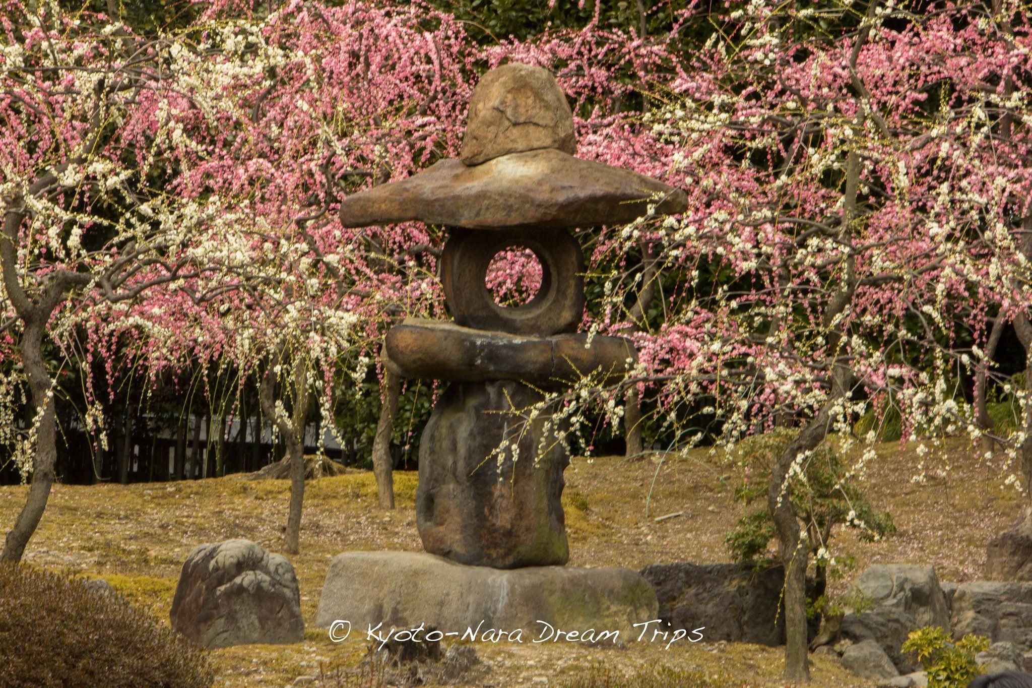 Plum Blossom Season at Jōnan-gū Shrine in Kyoto.   Plum Blossoms ...