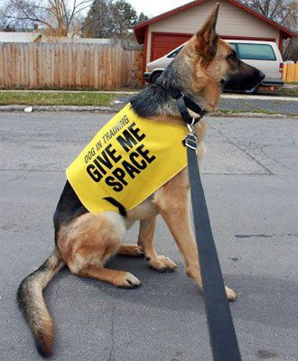 What Is The Yellow Dog Project German Shepherd Dogs Aggressive