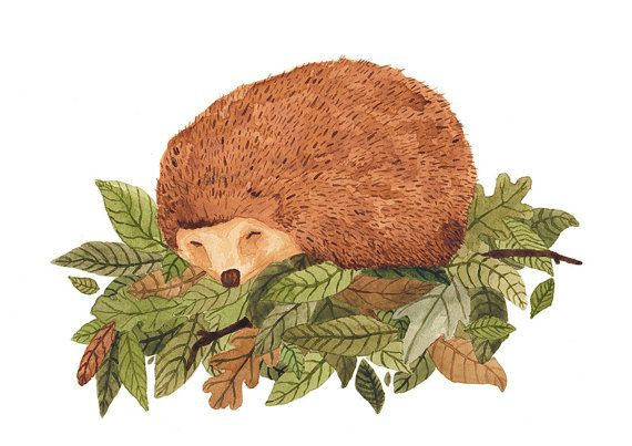 Hedgehog Illustration Archival Print A4 by CarolFarrell on Etsy, $20.00