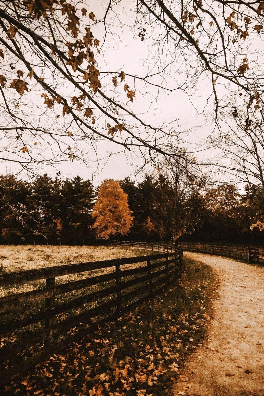 Photo of Bild über schön im Herbst von Meg auf We Heart It