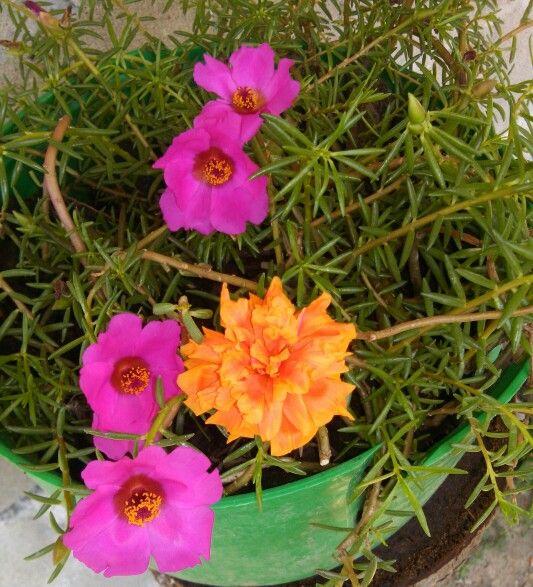 Ma anitas flores pinterest jardiner a y flores for La bioguia jardines