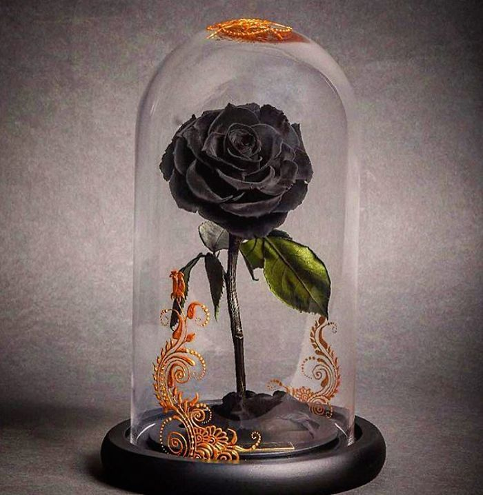 Real Beauty And The Beast Roses Exist They Ll Last For 3 Years