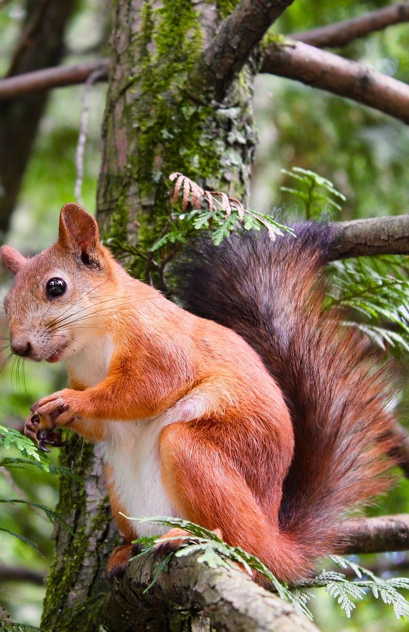 a squirrel on a branch of a tree pictures mammals pinterest