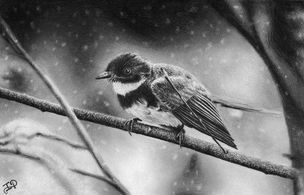 50 amazing pencil drawings pencil drawing of winter bird