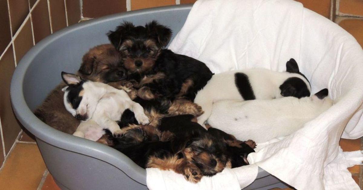 Diese Hundewelpen sollten offenbar in einem Transporter