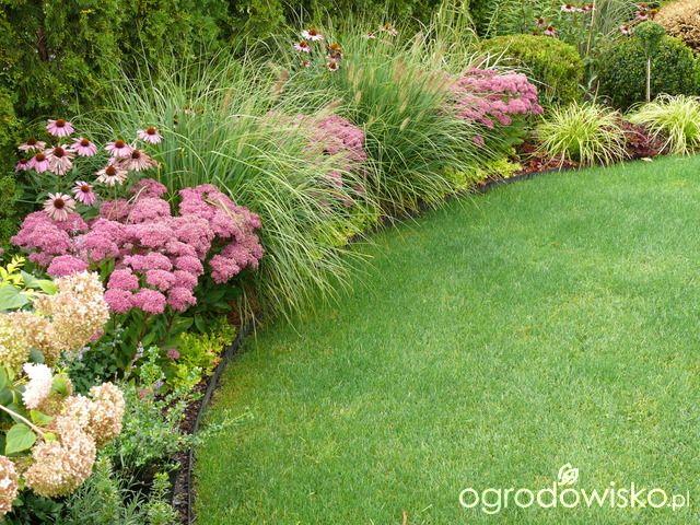 Ogrod Maly Ale Pojemny Garden Forum Plants Garden Borders