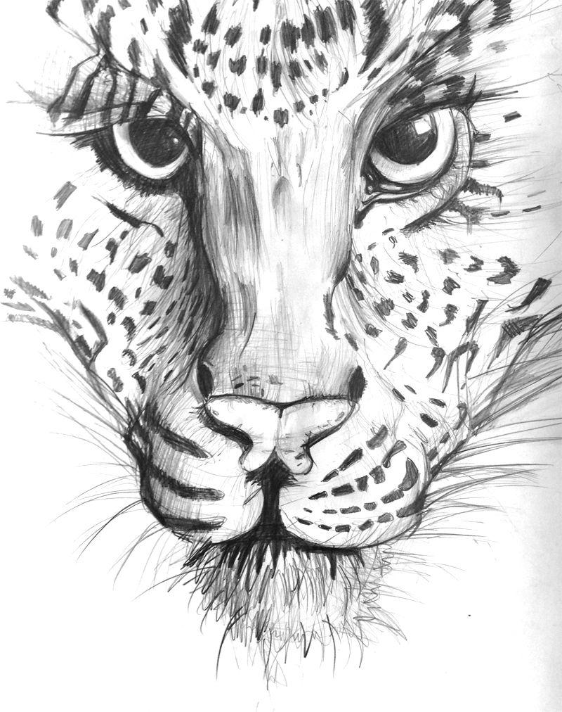 Tigre-grande-dribbbble