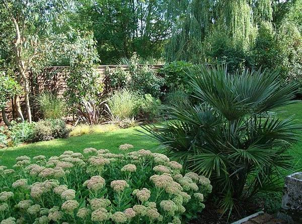 Small Gardens · Chamaerops Humilis Palm Tree Mediterranean Fan Palm)